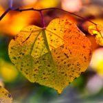 Zapowiedź: Jesień na Ponglishu
